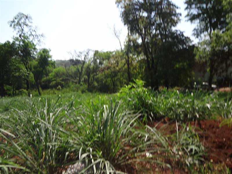 Áreas à venda, Jardim Paulistano - Ribeirão Preto/SP